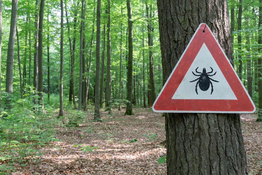 Maladie de Lyme : des antibios inutiles 4 fois sur 5